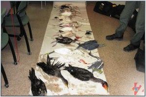 bird-massacre